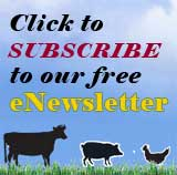 click here to subscribe to your free newsletter